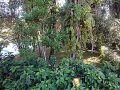 Área verde preservada